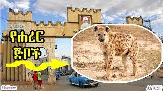 የሐረር ጅቦች - Harar Hyena - VOA