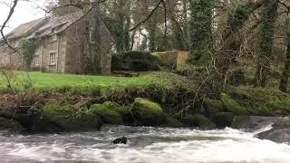 English Countryside Stream Sounds | Bird Songs & Flowing Water Sounds for Sleeping & Relaxing