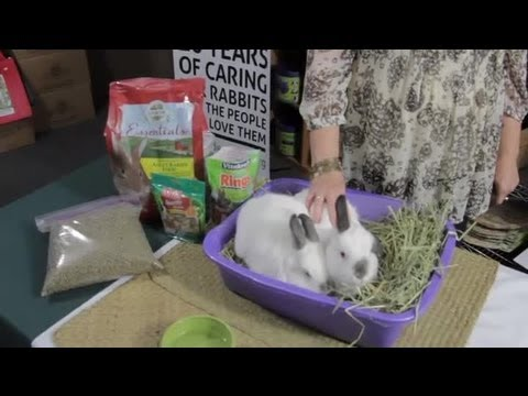 What Do Rabbits Really Eat? : Rabbit Care