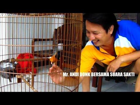 Kisah Sukses : Mr. Andi Donk Orbitkan Murai Batu Suara Sakti Raih Rekor Muri video