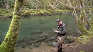 Skagit River Fall Coho