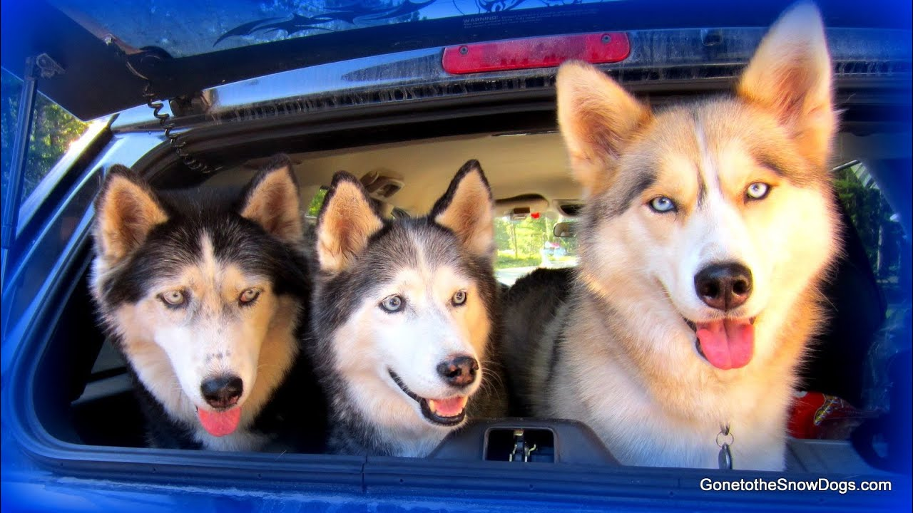 Snow Dogs Names
