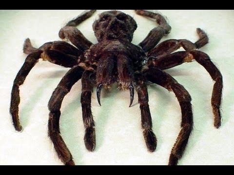 Giant Bathroom Spider Youtube