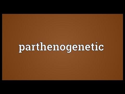 Header of parthenogenetic