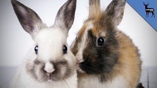 Why Do Bunnies Have So Much Sex?