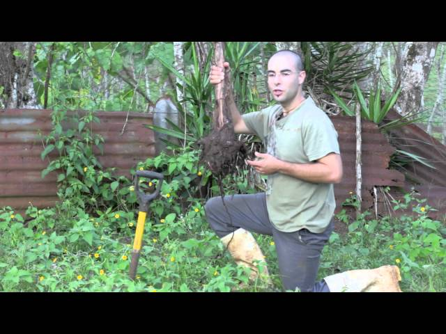 The how on growing your own bananas