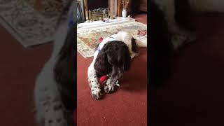 Truffle gets a new toy
