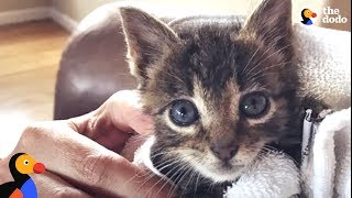 Tiny Kitten Becomes An Adventure Cat Like His Brother | The Dodo
