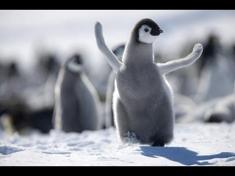 Why Penguins Lost Their Ability to Fly