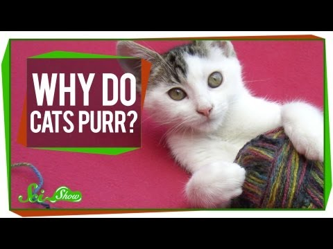 SciShow - Why do cat's purr?