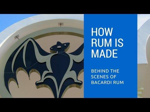 Behind The Scenes of Bacardi Rum Distillery