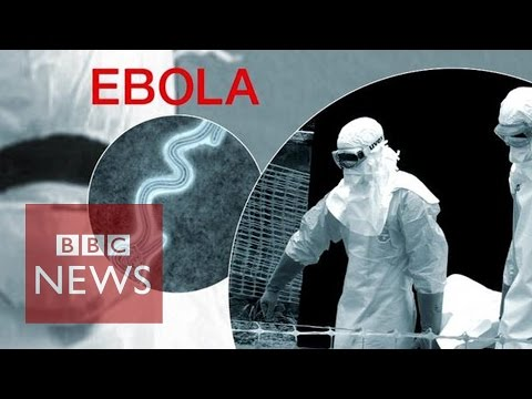 Ebola Virus: Third victim dies in Nigeria - BBC News