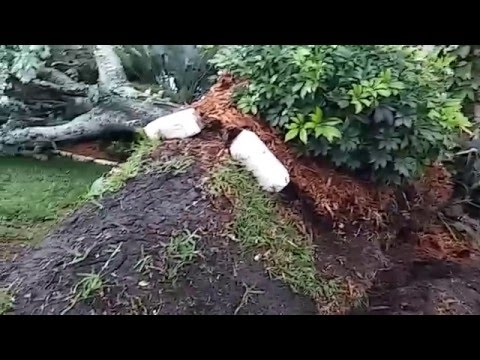 Tornado Hits Westport in Port Richey, Florida