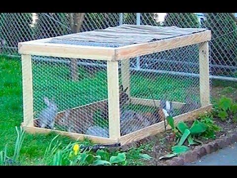Загон для кроликов своими руками