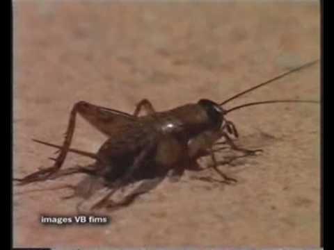 Un parásito induce a un insecto a suicidarse