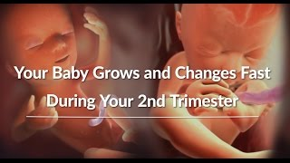 Your Growing Baby's Changes Through the Second Trimester