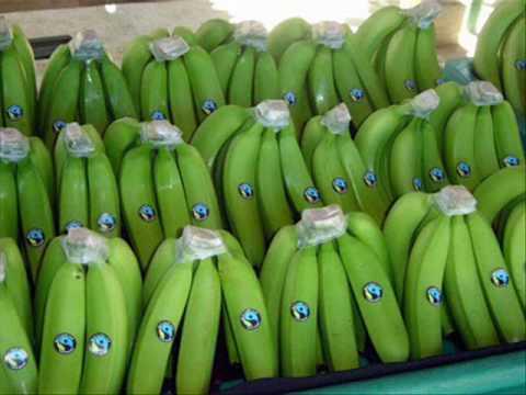 Agritop - Banana Export