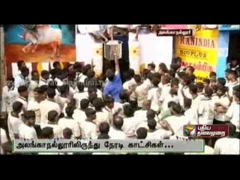 Report On The Alanganallur Jallikattu video
