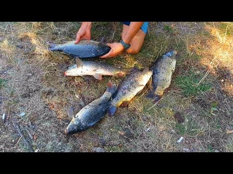 Рыбалка на двое суток. Ловля карпа на донку. Ловля карпа на горох