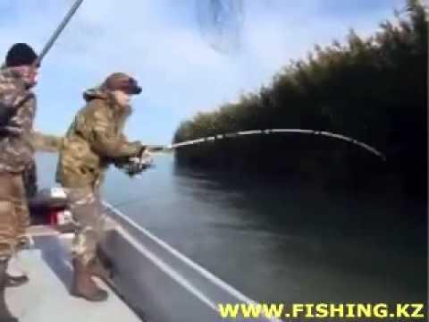 амурская рыбалка ютуб