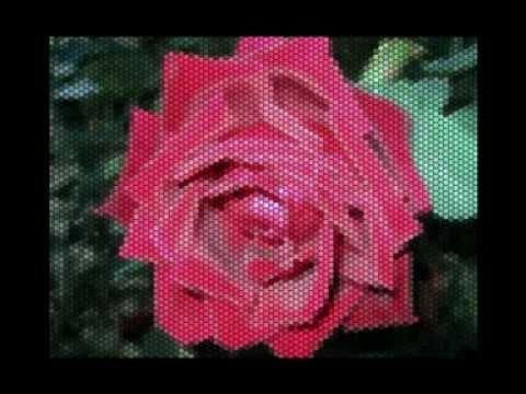 Как хороши, как свежи были розы ...