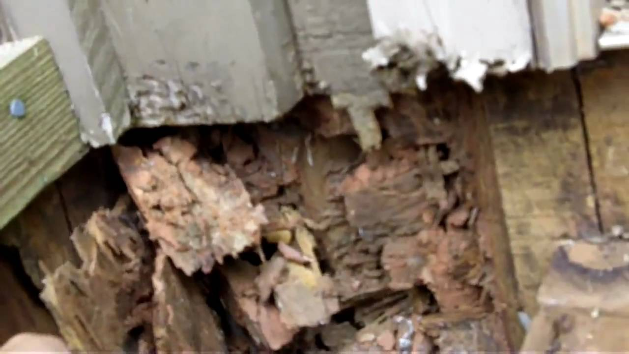 How To Fix Termite Damage In Homes 770 889 0954 Youtube
