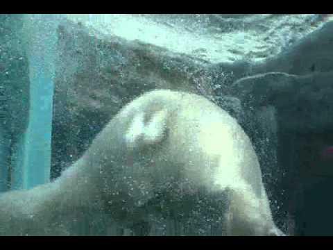 日本平動物園 水中トンネルで泳ぐホッキョクグマのロッシー 2011.7.30