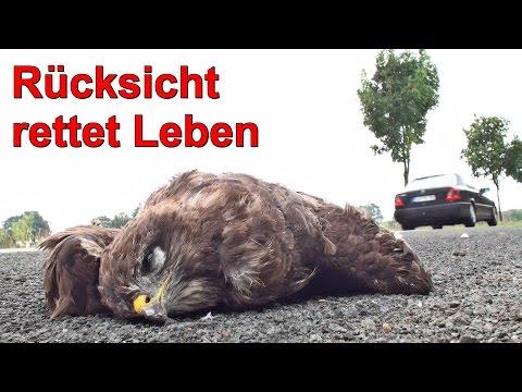 Rücksicht Rettet Leben - Tiere Im Straßenverkehr