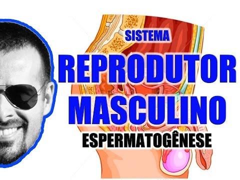 Vídeo Aula 059 - Sistema Reprodutor Masculino - Espermatogênese: A formação dos espermatozóides