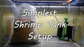 Simplest Shrimp Tank Setup