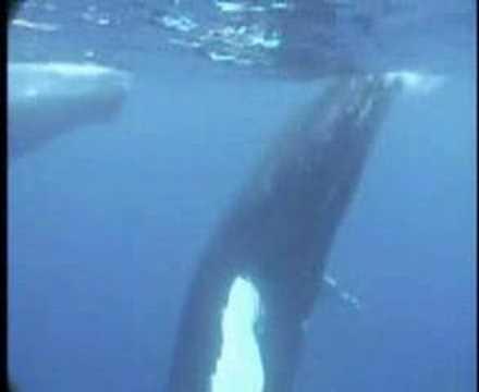Delfinek és bálnák (Dolphins and whales)