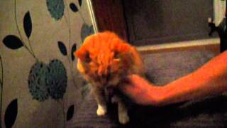 Old Pussy Cat Gets A Good Hoovering