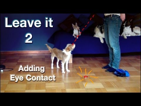 0 Leave it 2  the most important things to train  clicker dog training