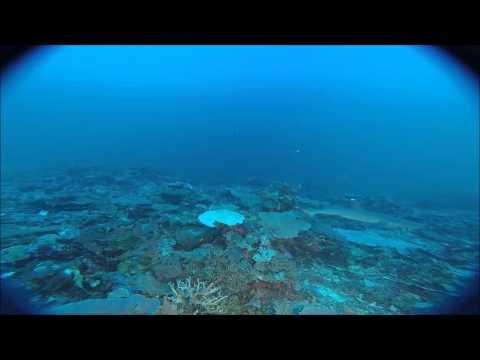 Timor Sea - White Tip Reef Shark ROV Highlights