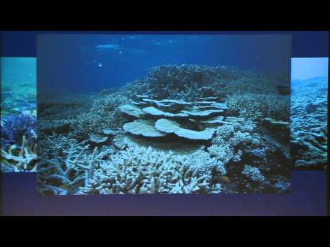 A reef in time: Are we heading for the sixth mass extinction?