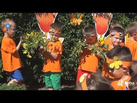 Dzień kwiatka 2017 Przedszkole Publiczne nr 10 w Brzegu reportaż