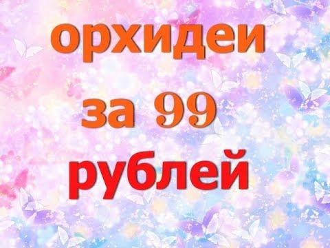 Орхидеи за 99 рублей .