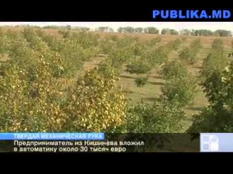 Молдавский фермер вложил 30 тысяч евро в машину для сбора урожая ореха
