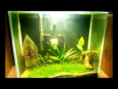 Nuagli 12 Week Trial in Freshwater Aquarium: The Recap