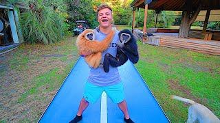 FLIPPING WITH MONKEYS ON BACKYARD TRAMPOLINE PARK!
