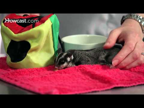 How Well Do Sugar Gliders Get Along with Other Pets? | Sugar Gliders