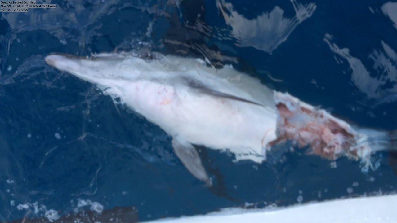 Ulape Island Of The Blue Dolphins Shark vs Dolphin Blue ...