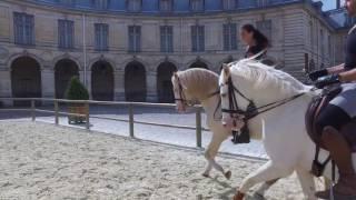 Unique Equestrian Choreography by Bartabas