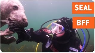 Scuba Diver and Seal Become Best Friends