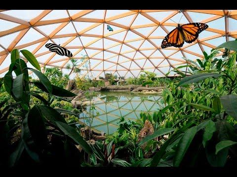 Amazonica, het grootste vlinderparadijs van Europa - Discover tropical butterfly paradise Amazonica