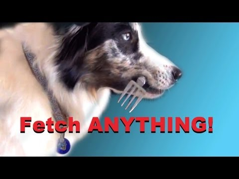 0 Teach Your Dog to Fetch Anything!  clicker dog training tricks