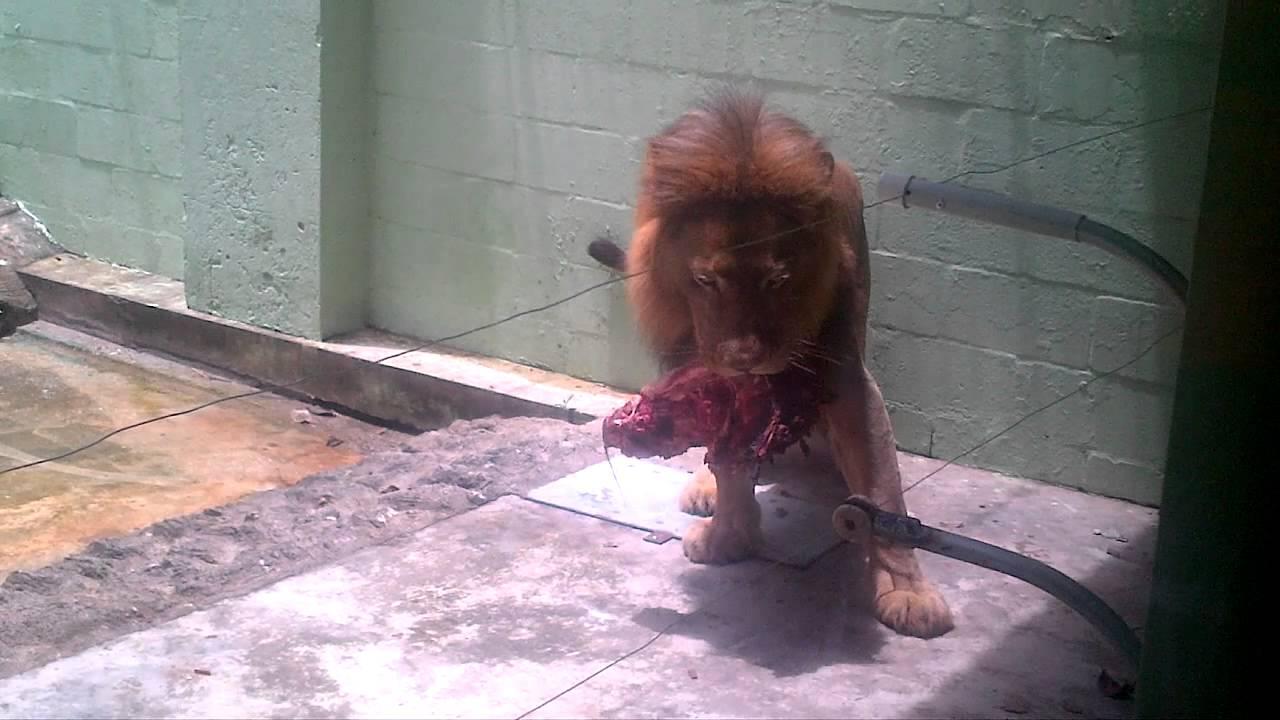 Pictures of Valleys in Trinidad Trinidad's Emperor Valley Zoo