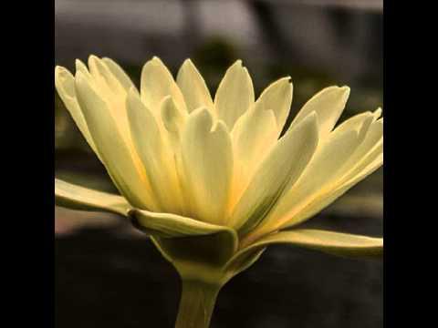 #blume #flower #nature #summer #garden #natur #flowers #love #blüte #sommer #garten #beautiful #na