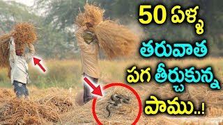 పుట్టలో ఉన్న పాముని పెట్రోల్ పోసి తగలపెట్టాడు || Snake Came & Revange After 50 Years at Village