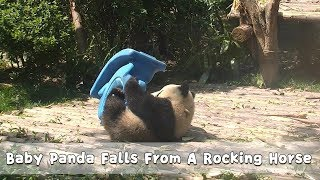 Baby Panda Falls From A Rocking Horse   iPanda